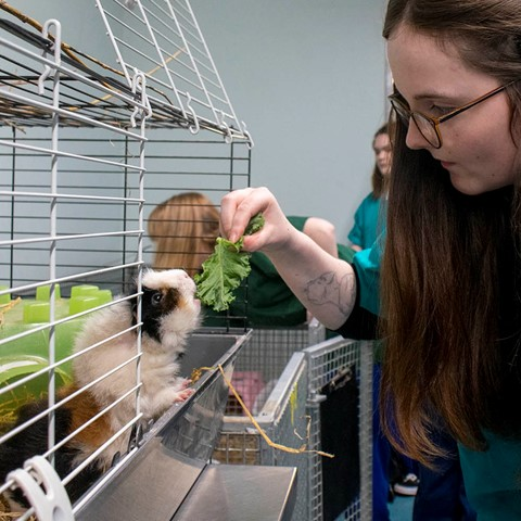 animal care student